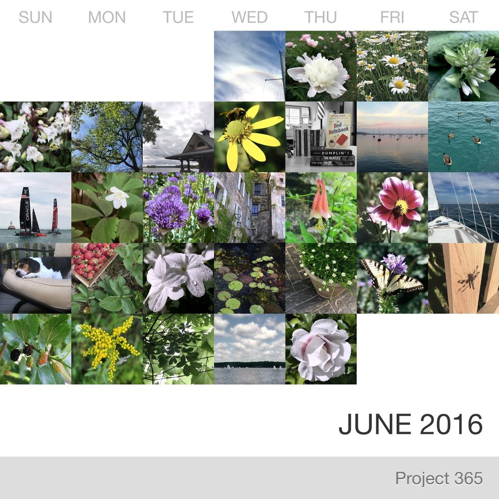 Project 365 _June-2016_Collage.jpg