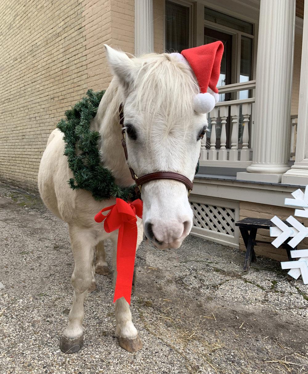 Christmas Pony 1