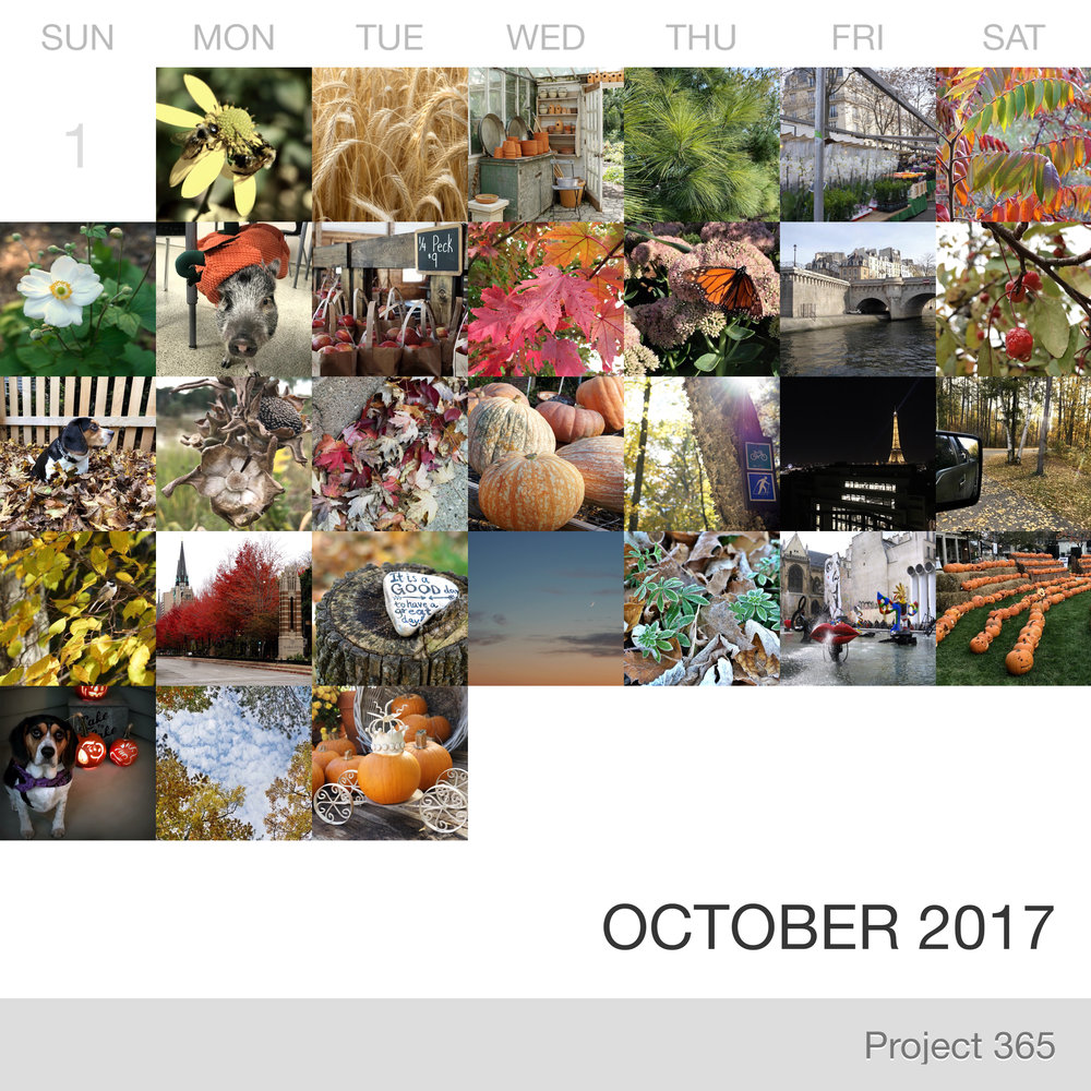 Project 365 _October-2017_Collage.jpg