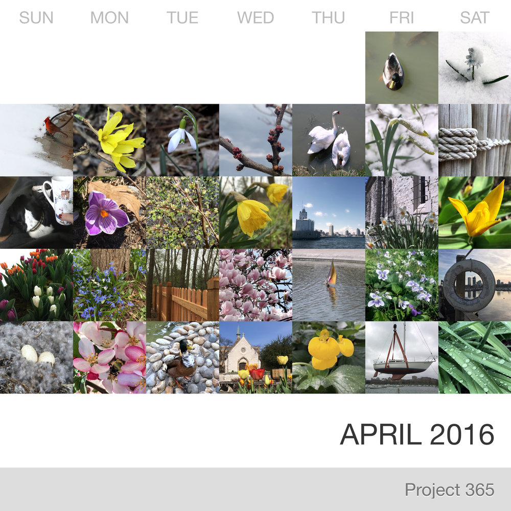 Project 365 _April-2016_Collage.jpg