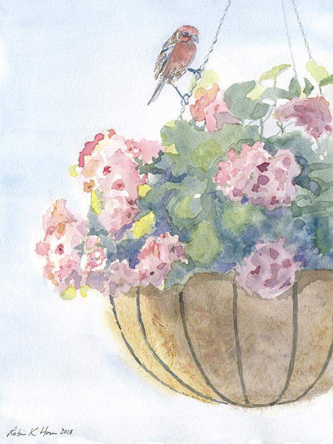 House finch nesting :geranium.jpg