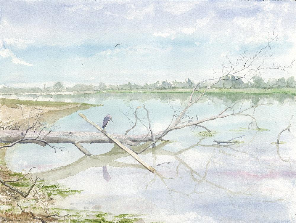 Heron at Sunken Meadow