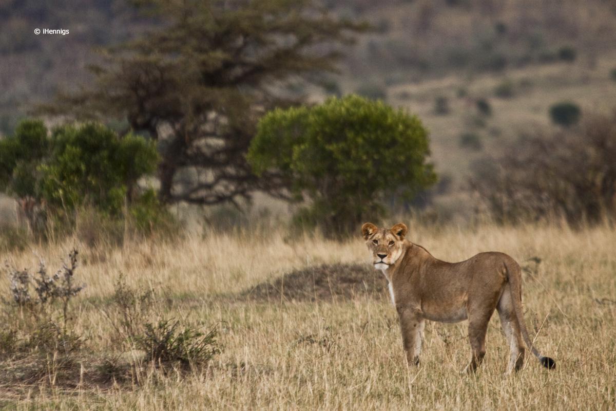 safari11