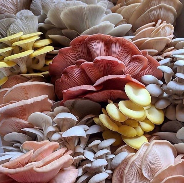 Favorite fungi? We'd love to hear! 📸 @fungus_humongous