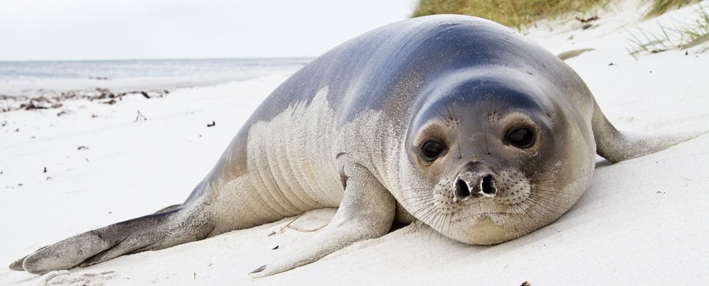YoungSeal2.jpg