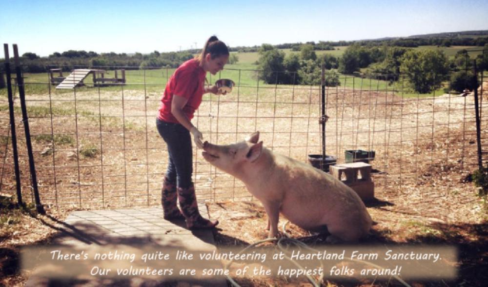 PigFeeding-ThisOutsideLife.com/rescue