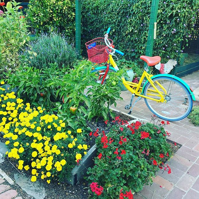 Look what showed up in my garden! #googlebike #rosgarden