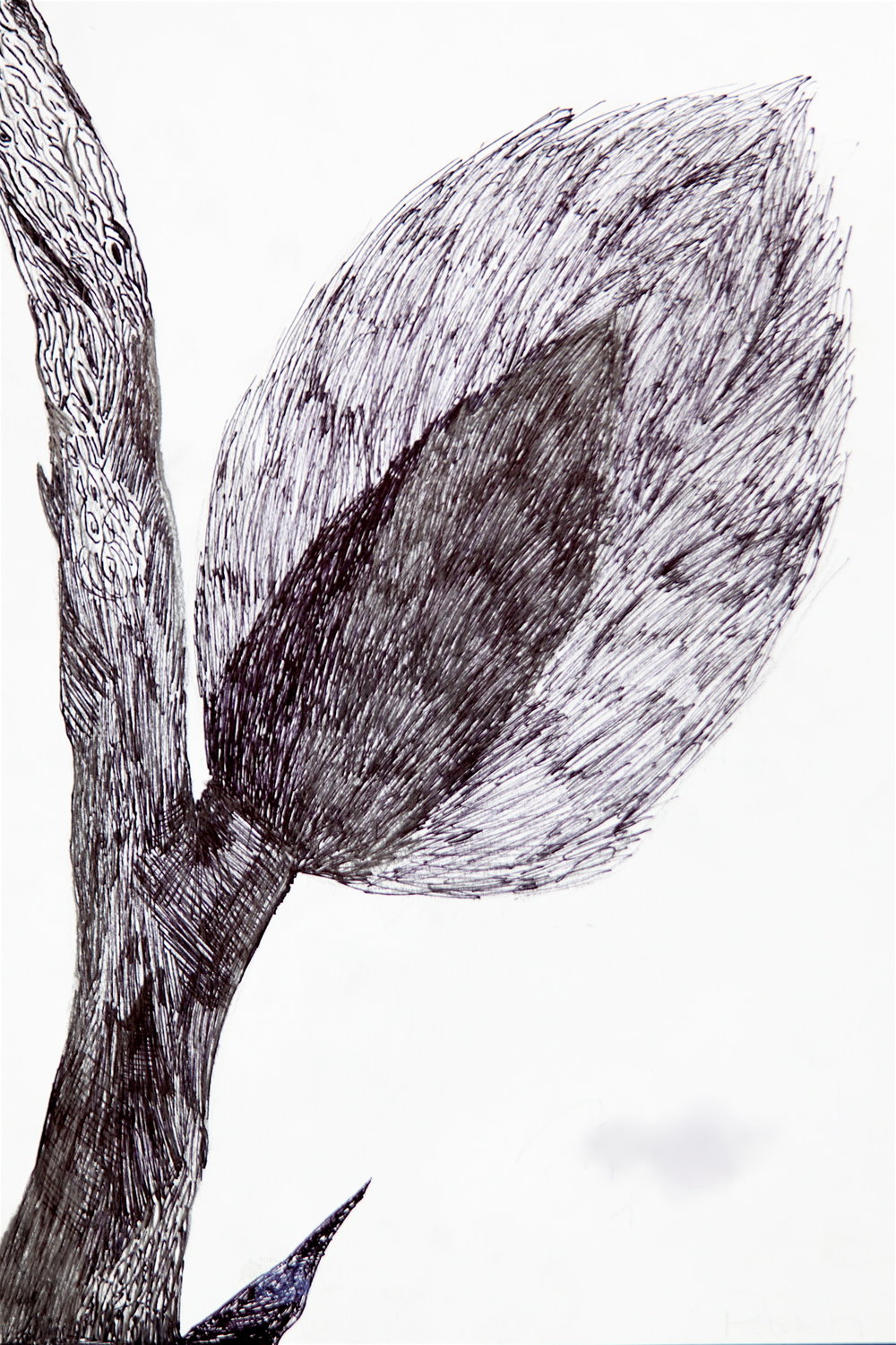 "Grade 5~ Still Life, Perspective Drawing, ""Pussy Willows""  Pen & Ink"