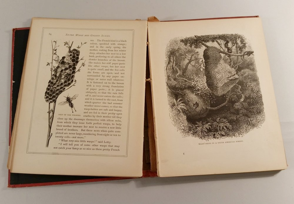 re-binding a sewn book