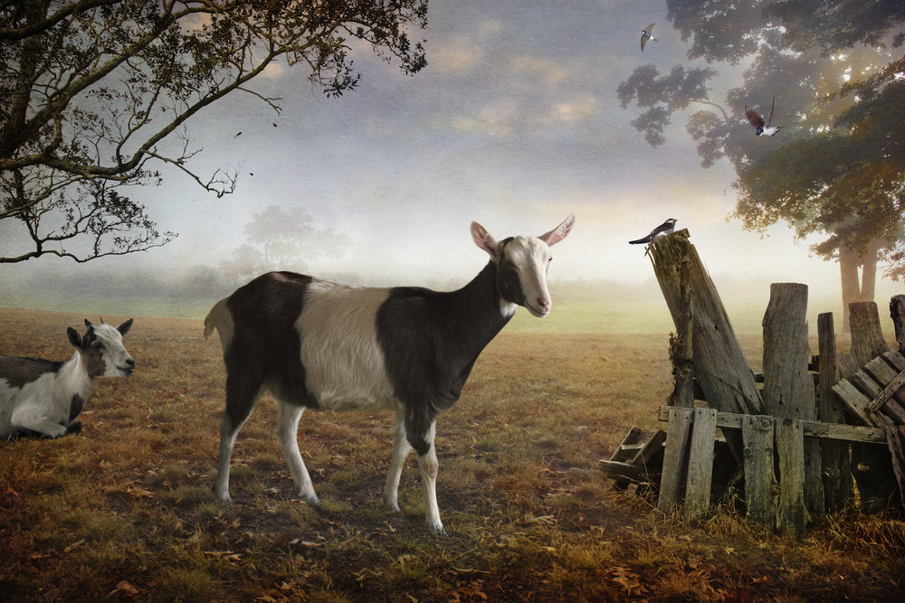 Fall - Pastorale