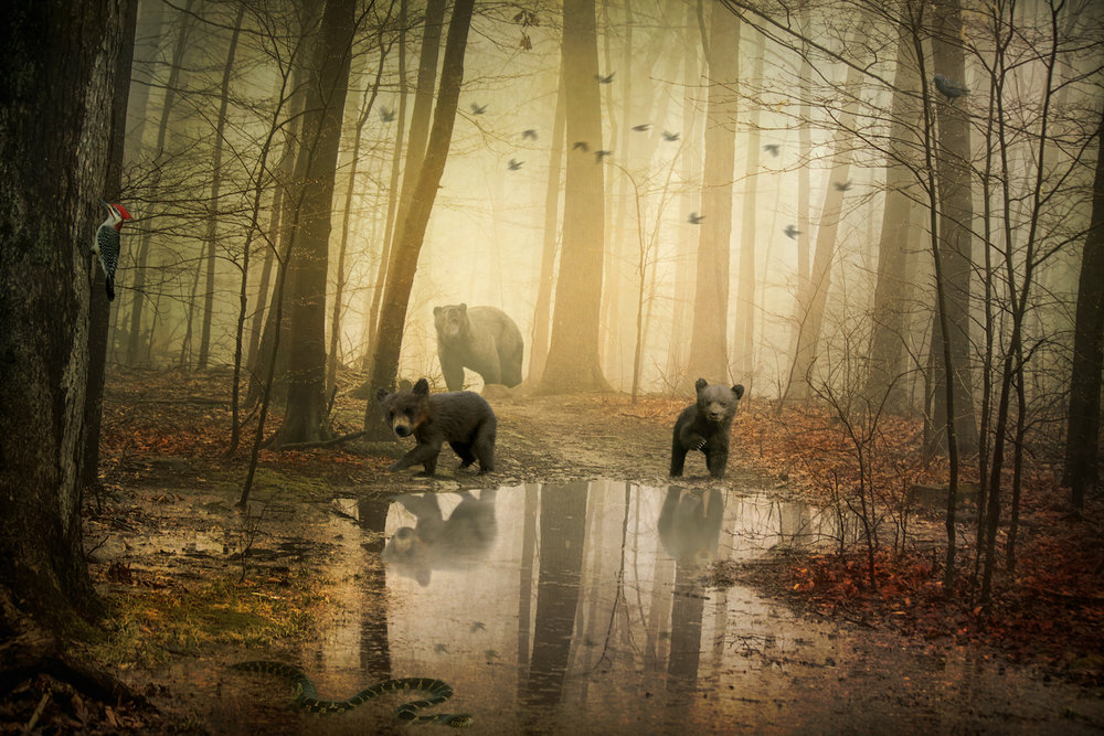 Bears at the Pond