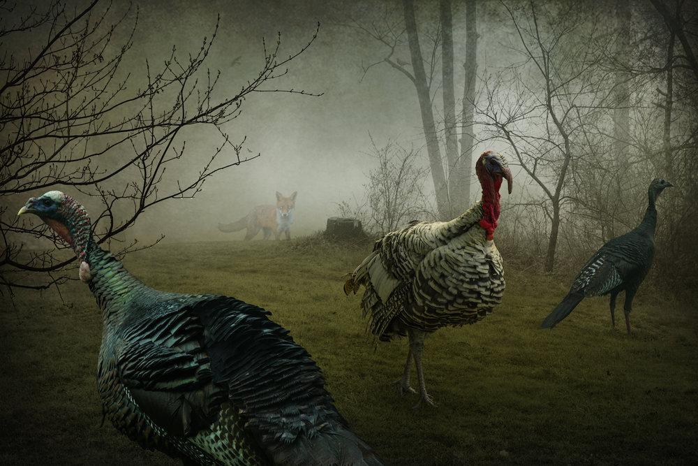 The Fox + the Turkeys