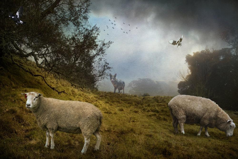 The Grazing Sheep