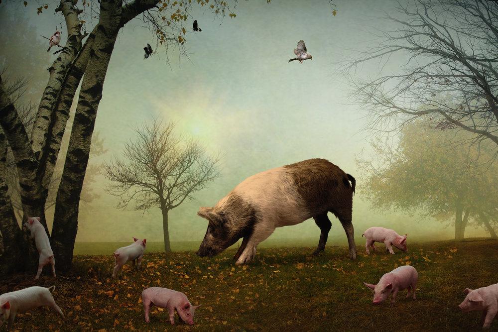The Pig + the Sparrow