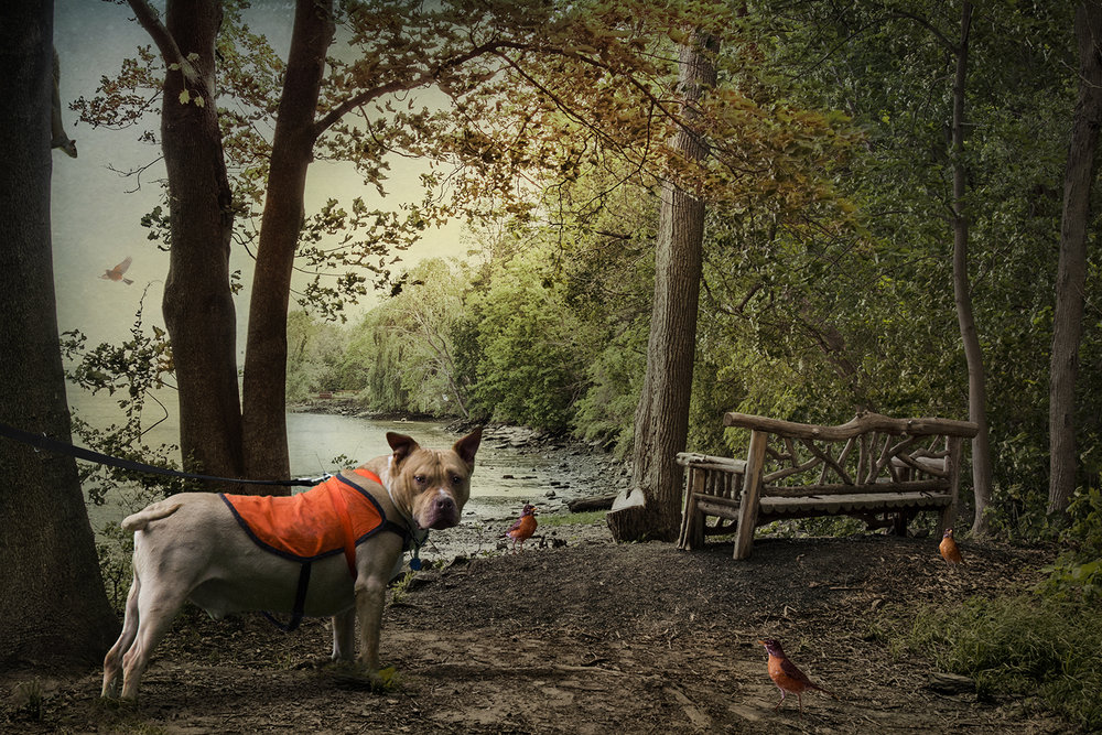 The Tethered Dog