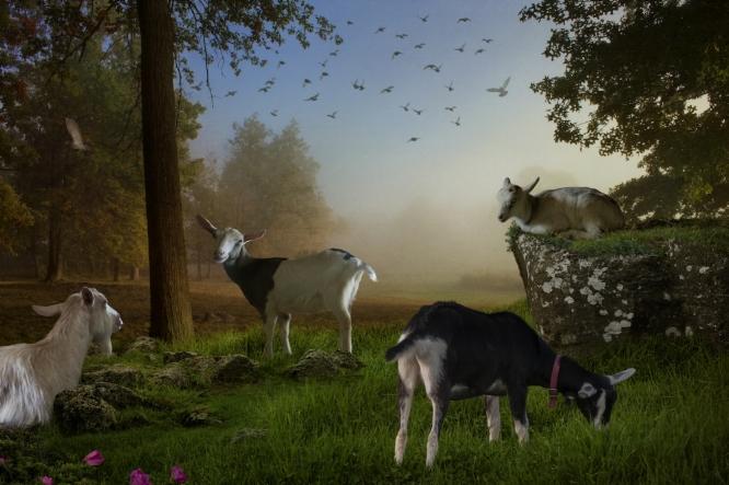 Pastorale - Summer