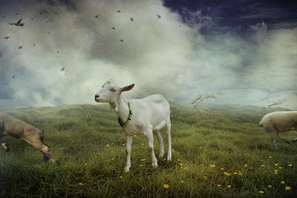 Pastoral - Spring
