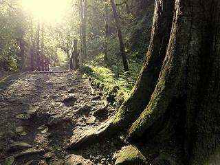 ForestPark_MikeRohrig.jpg