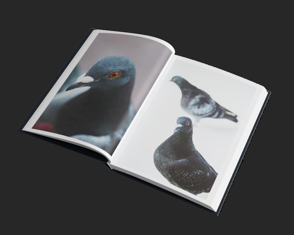 Book_Mockup_06 0 1.png