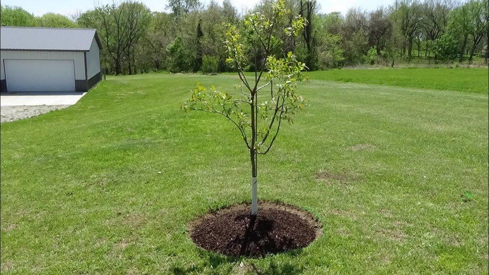 Papis lawn Services - Landscape - Landscaping - Yulee FL - Fernandina FL - Jacksonville FL (18).jpg