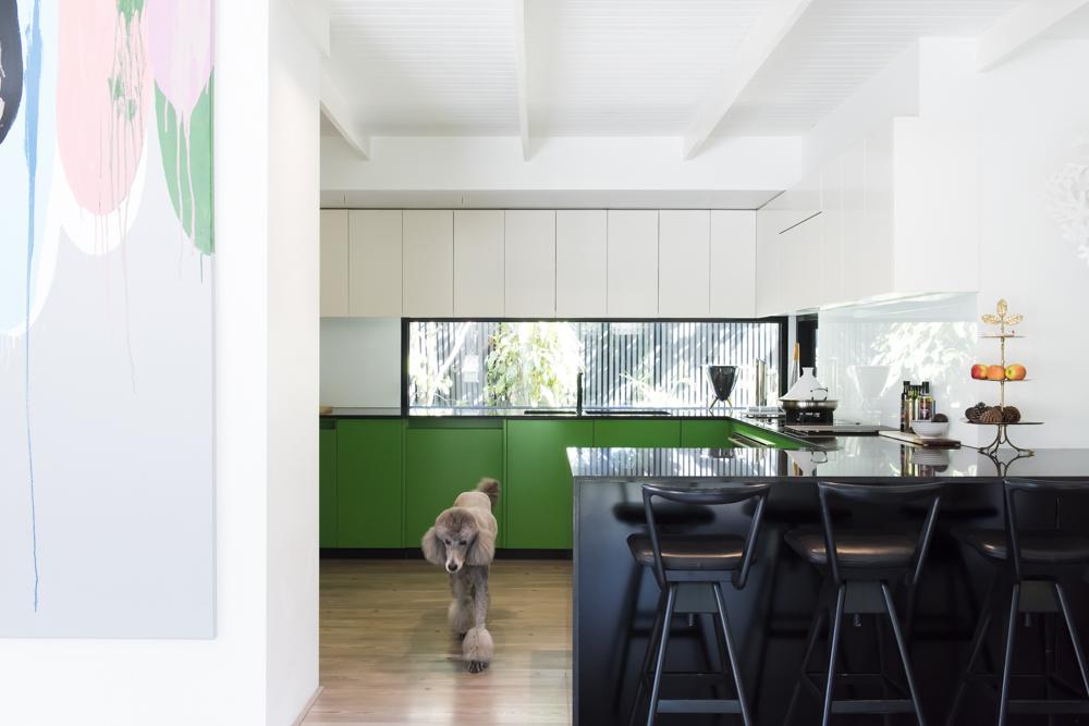 Resident Dog Blog-Nicole England-Roxy1.jpg