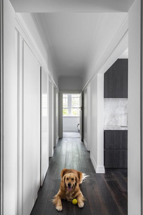 Resident Dog Blog-Nicole England-Humphrey4138.jpg