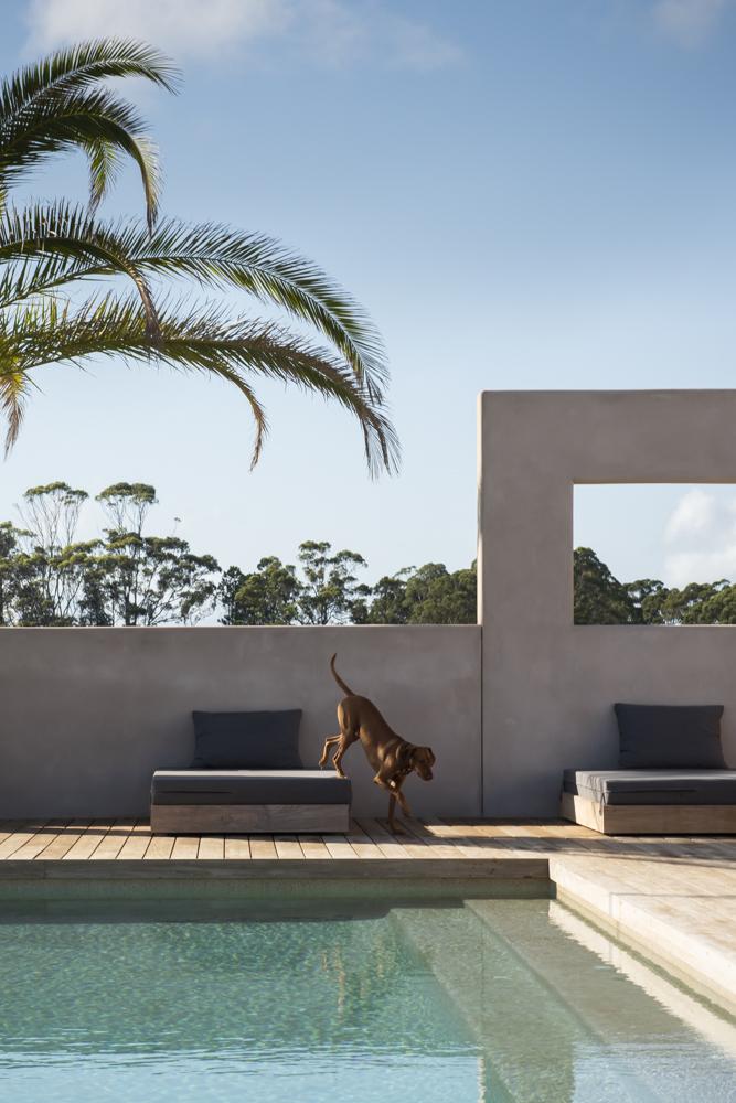Resident Dog Blog-Nicole England-Ranger4621.jpg