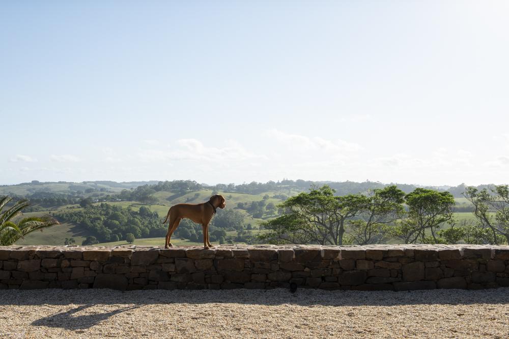 Resident Dog Blog-Nicole England-Ranger4593.jpg