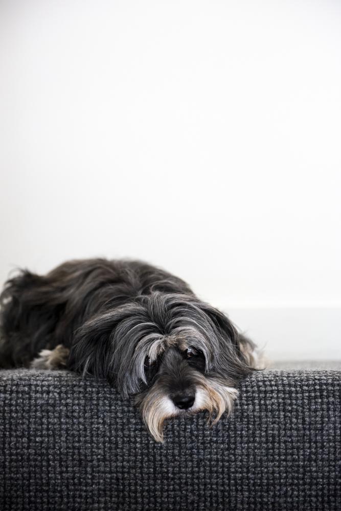 Resident Dog Blog-Nicole England-Bones0278.jpg