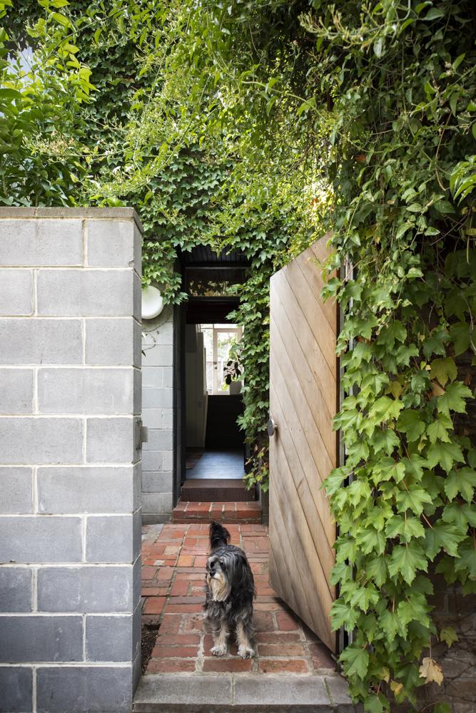 Resident Dog Blog-Nicole England-Bones0408.jpg