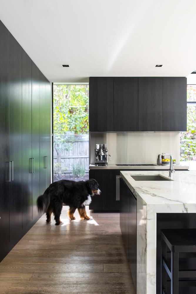 Resident Dog Blog-Nicole England-Meiko0760.jpg