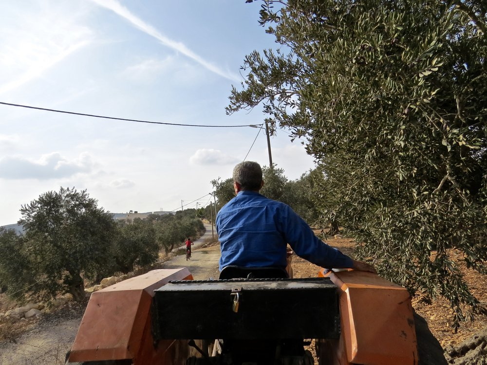 Taking the harvest to the olive press.