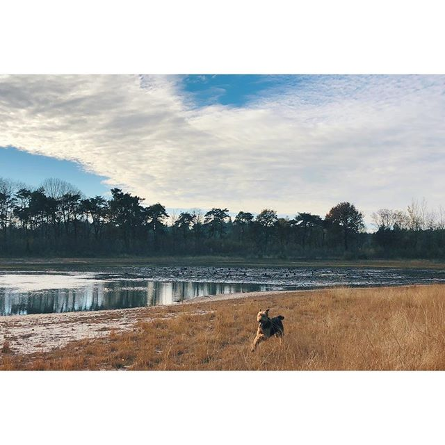 After the snow comes mud... And grey grey skies, 👱🏻♀️drove until we saw a tiny piece of blue sky: it was gone minutes after this picture was taken. What are your tips to chase the grey sky boredom away? . . .  #featuremydoginnature #excellent_dogs #dogsandpals #outdoordog #lessismoreoutdoors #thegreatoutdoors #thegreatoutdogs #wildernessculture  #hikingwithdogs #neverstopexploring #adventuredog #dogventurist #keepwalking  #naturelovers #stayandwander #exploremore #liveauthentic #countrylife #airedale  #dogsthathike #theoutbound #in2nature  #sendadogphoto #livefolktakeover #seekthetrails #borntoroam #goneoutdoors  #keepitwild #hikerlist #seekerofeverydaymagic