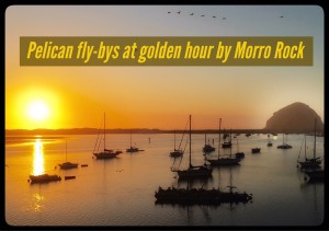 pelican fly bys golden hour morro rock