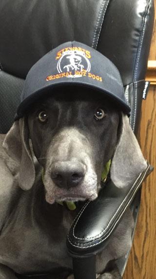 2015_dog_hat.jpg