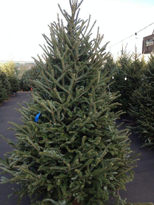 Christmas Tree Stewart S Original Hot Dogs