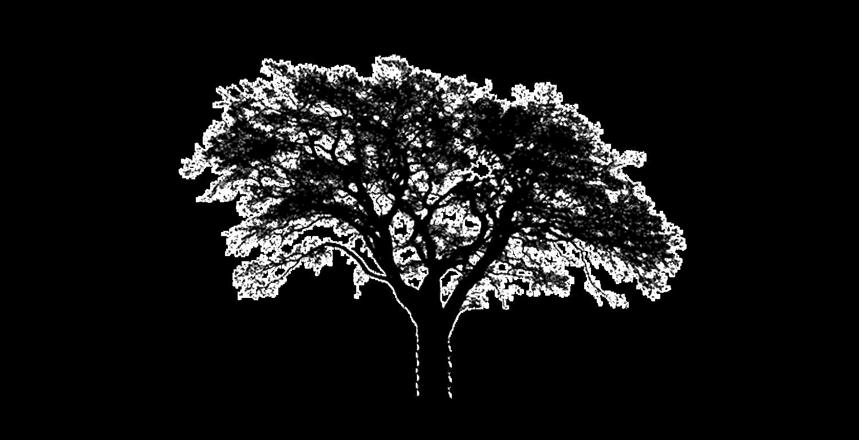 Tufts Trees llc's Company logo