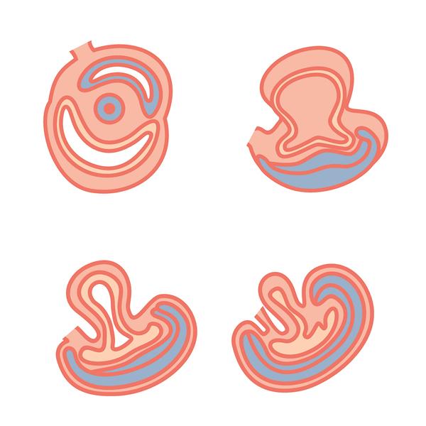 fetal-development3.jpg