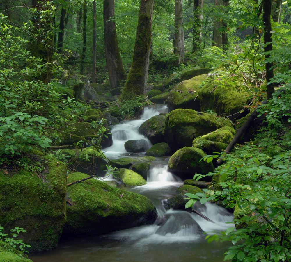 Lush green mossy creek:waterfall.jpg