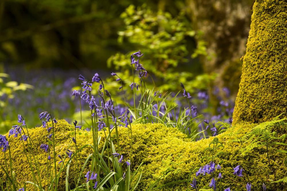 Purple flowers on yellow green moss.jpg