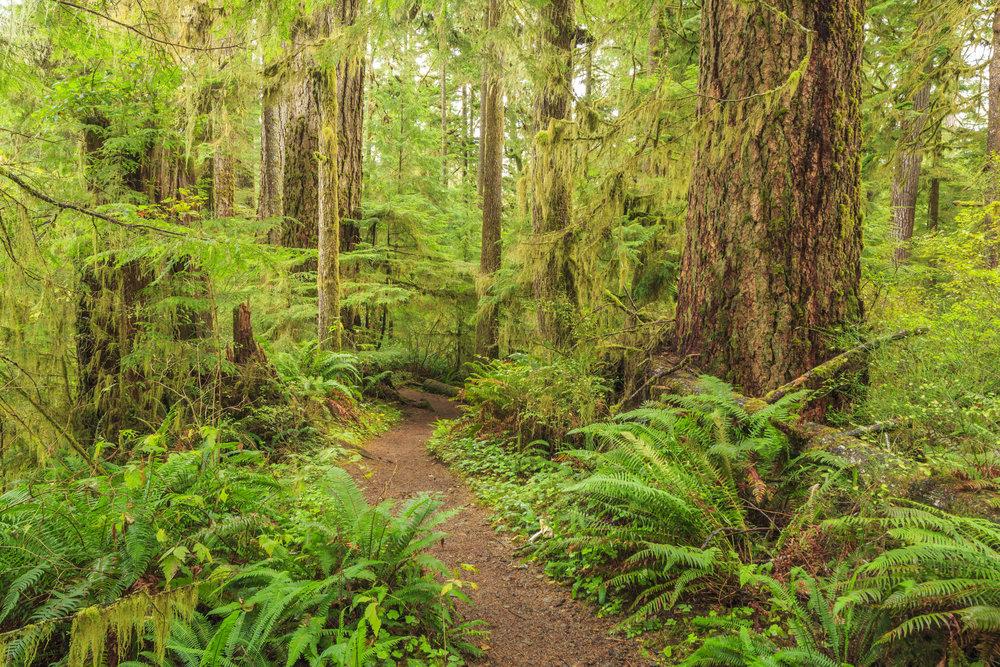 green fern path.jpg