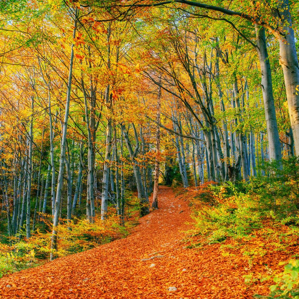 red path autum trees.jpg