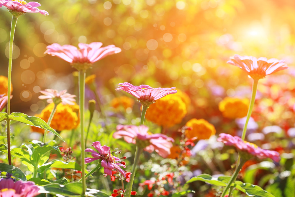 bright orange and pink flowers.jpg