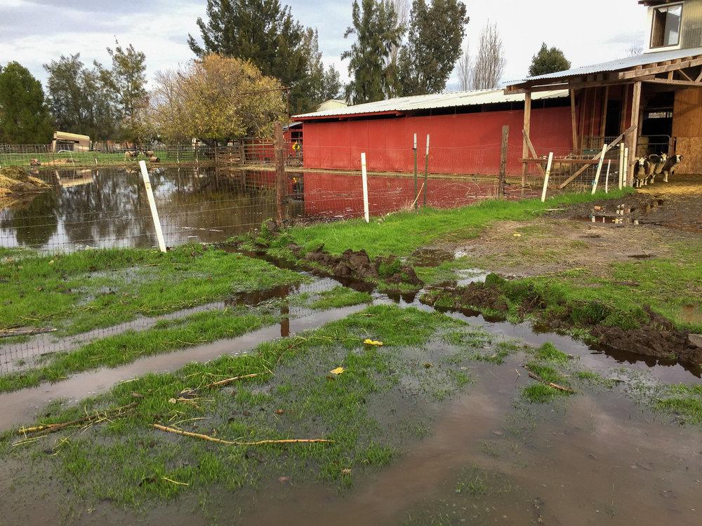 flooded_corral.jpg