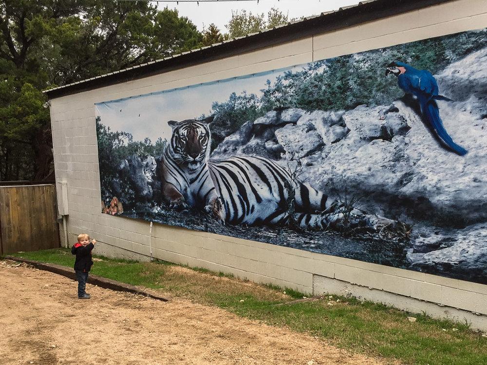 tiger_mural-austin_zoo.jpg