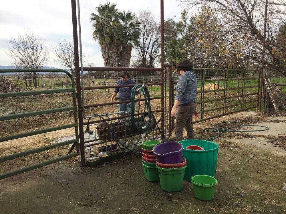 farm_club_cleaning_buckets.jpg