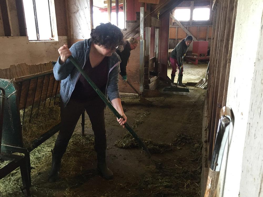 farm_club_cleaning_barn.jpg