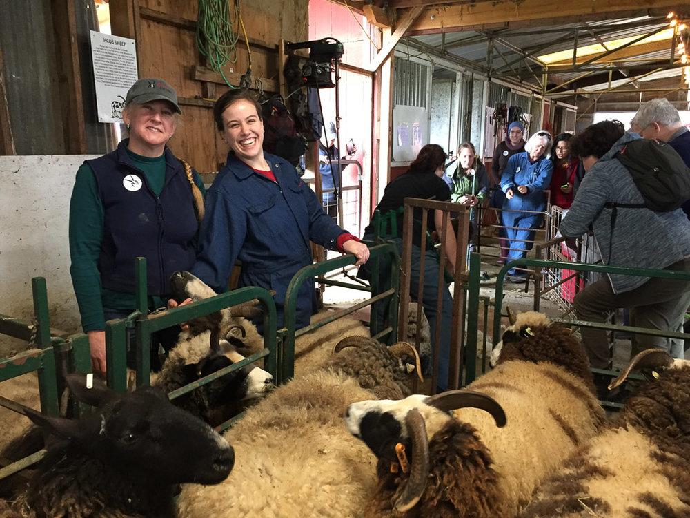 farm_club_shearing.jpg