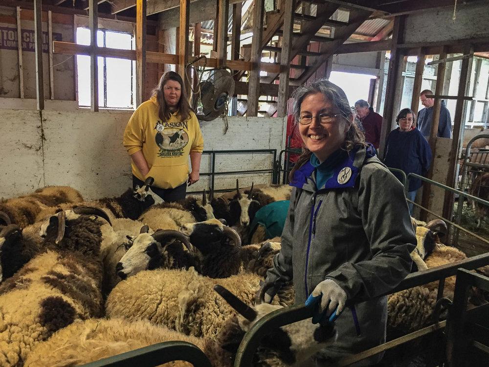 farm_club_sheep.jpg