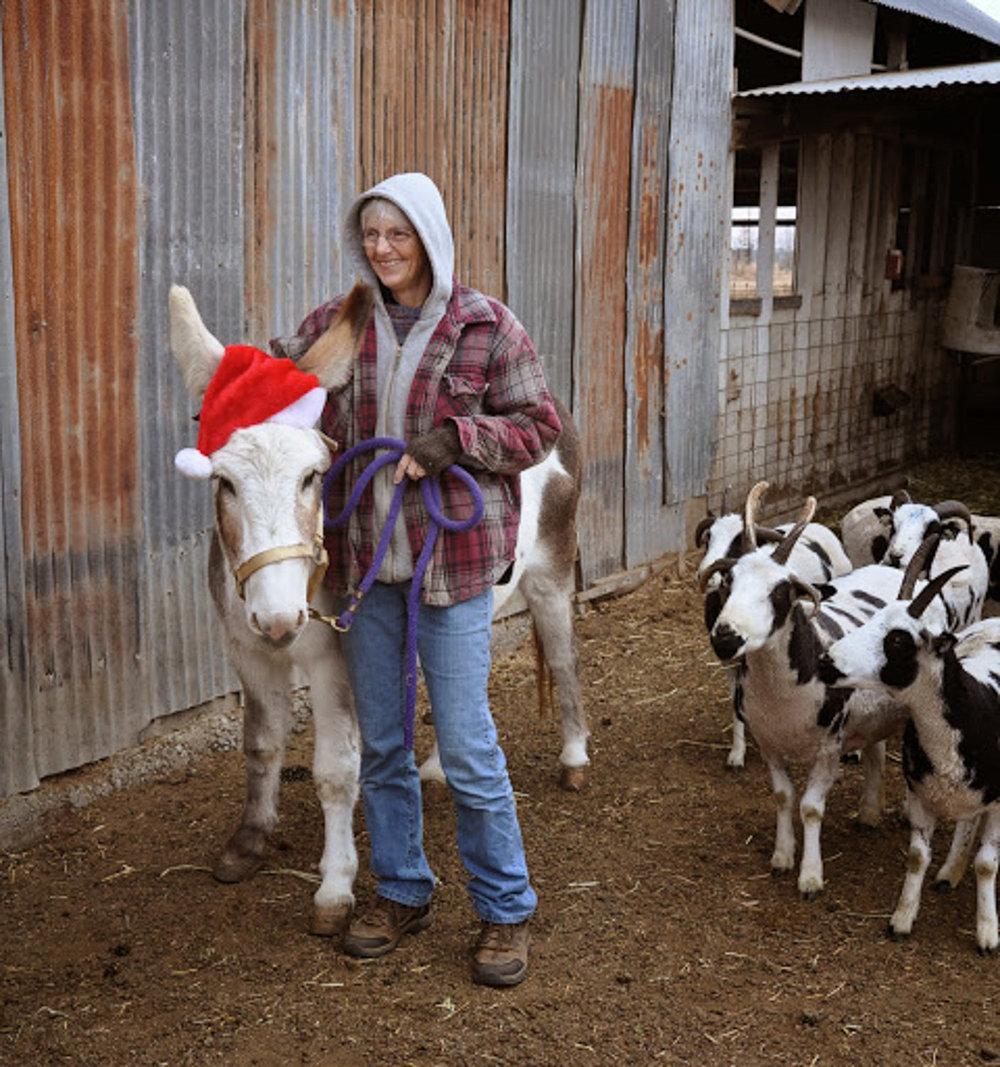 Donkey in Christmas hat.